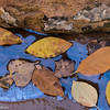 Leaves and natural oil slick in Zion.