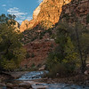 Along the Virgin River in Zion.