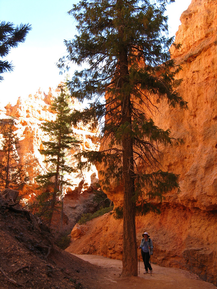 2011-04-20 Bryce trail 216