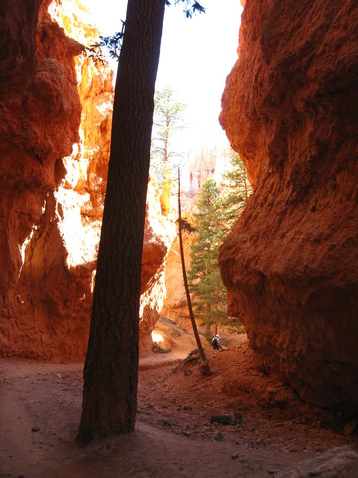 2011-04-20 Bryce trail 213