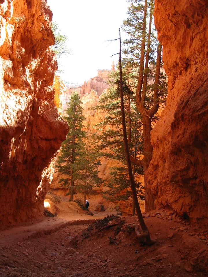 2011-04-20 Bryce trail 214