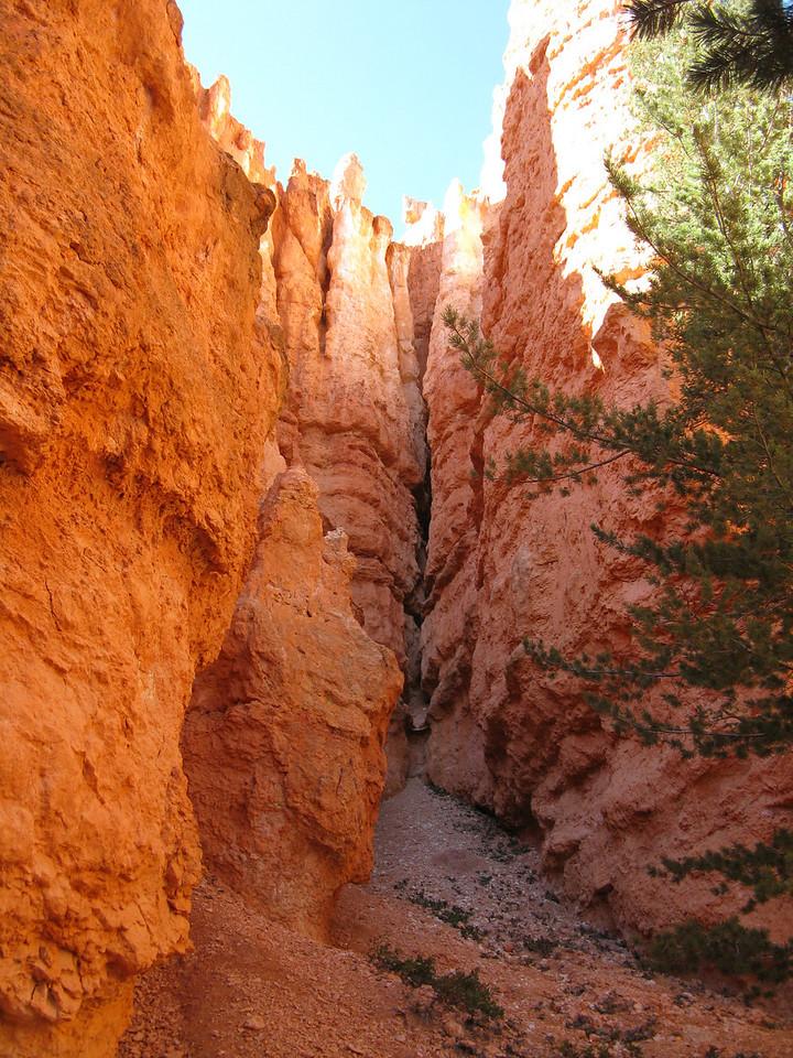 2011-04-20 Bryce trail 207