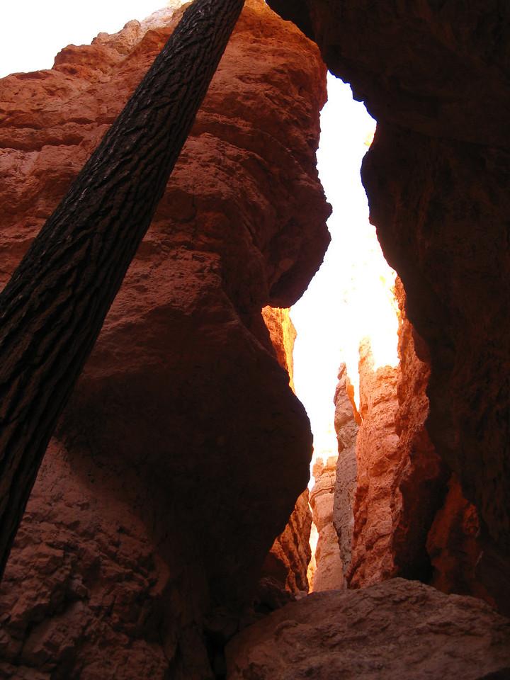 2011-04-20 Bryce trail 210