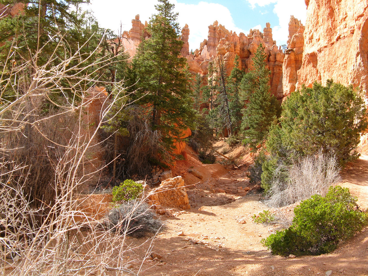 2011-04-20 Bryce trail 203