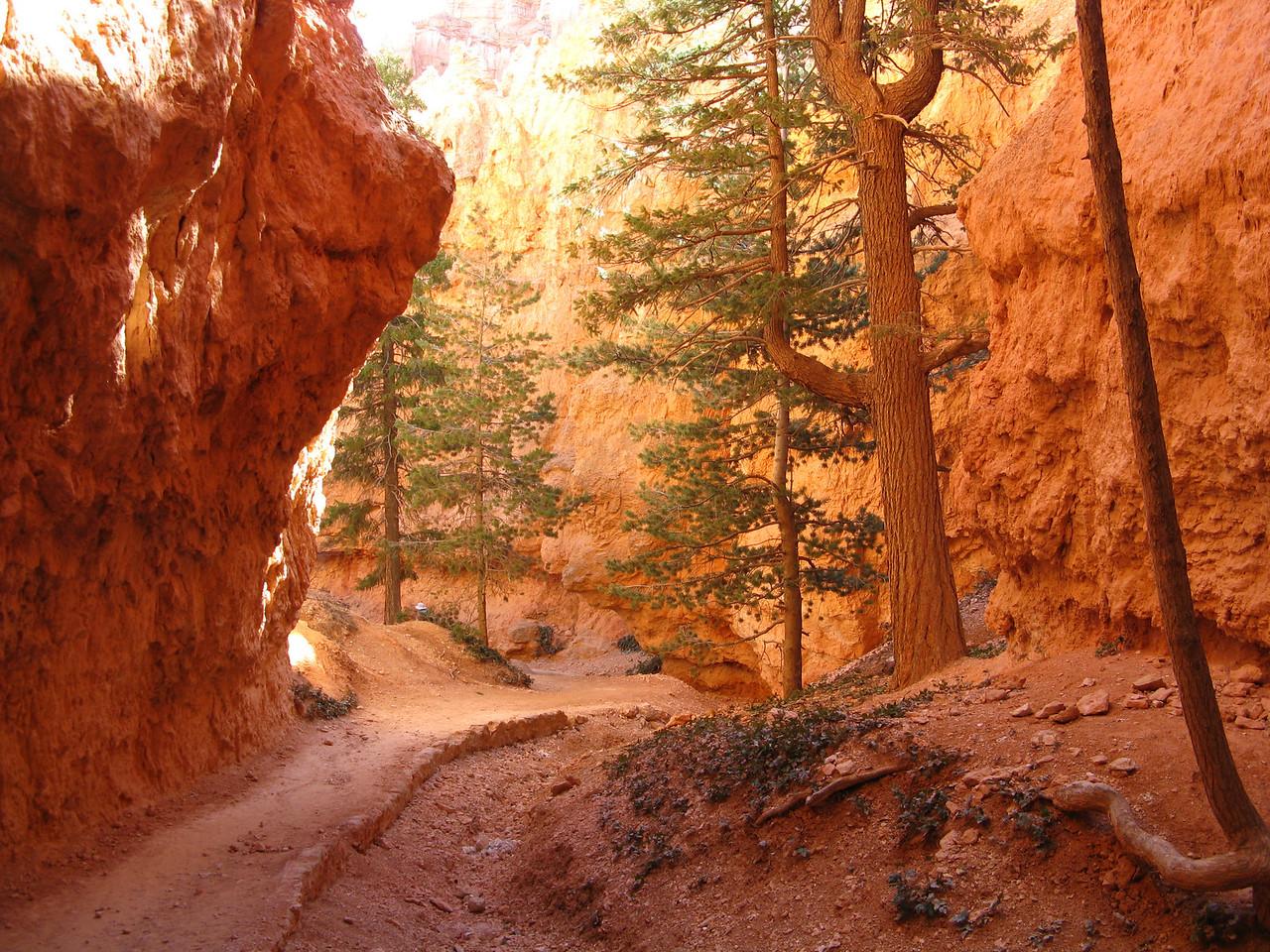 2011-04-20 Bryce trail 215