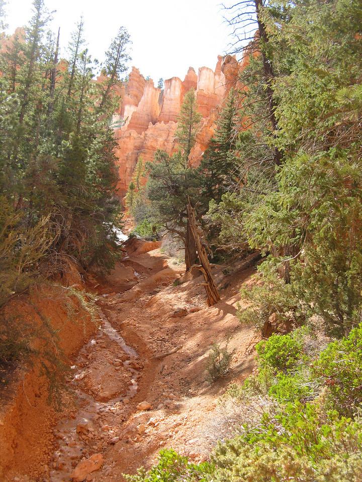 2011-04-20 Bryce trail 204