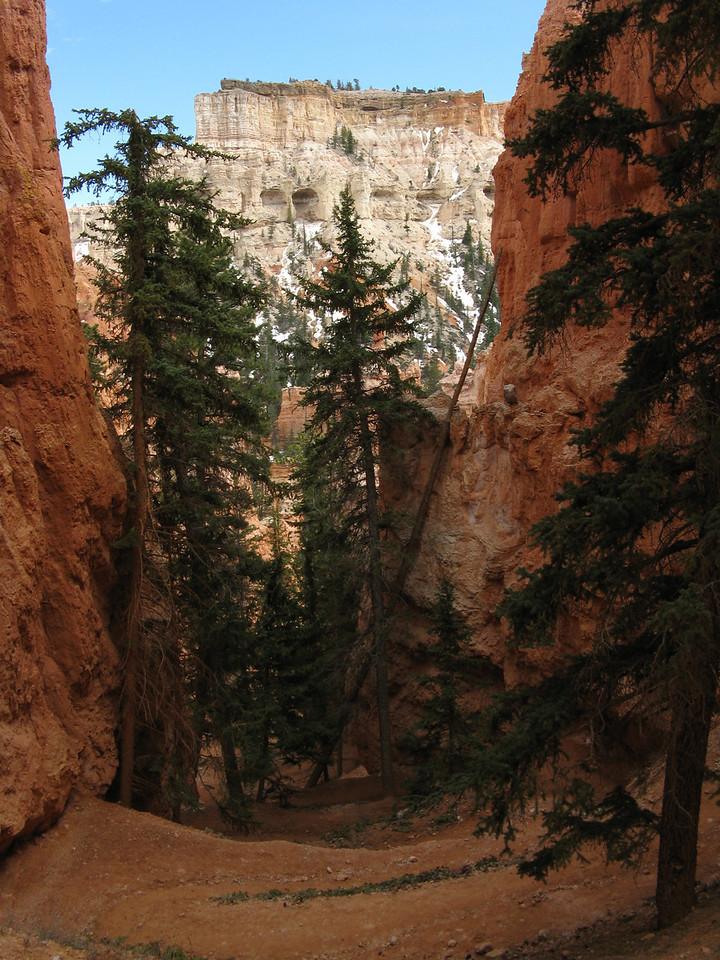 2011-04-20 Bryce trail 145