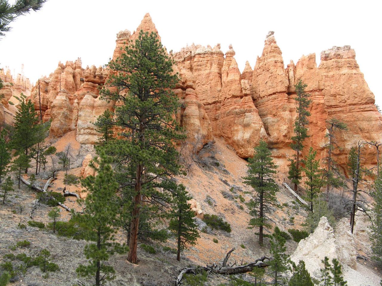 2011-04-20 Bryce trail 072