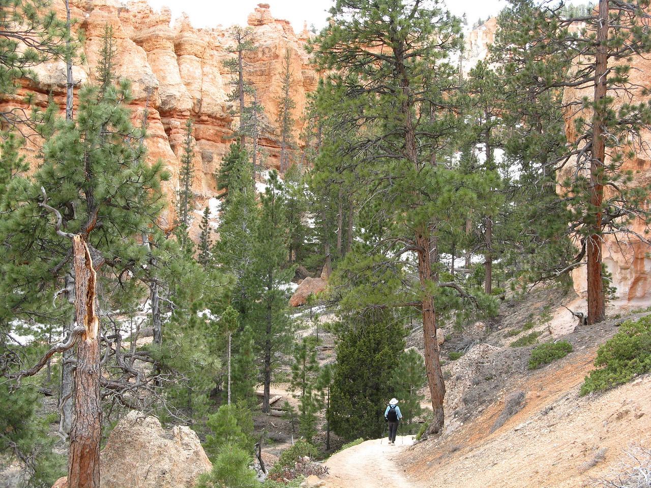 2011-04-20 Bryce trail 073
