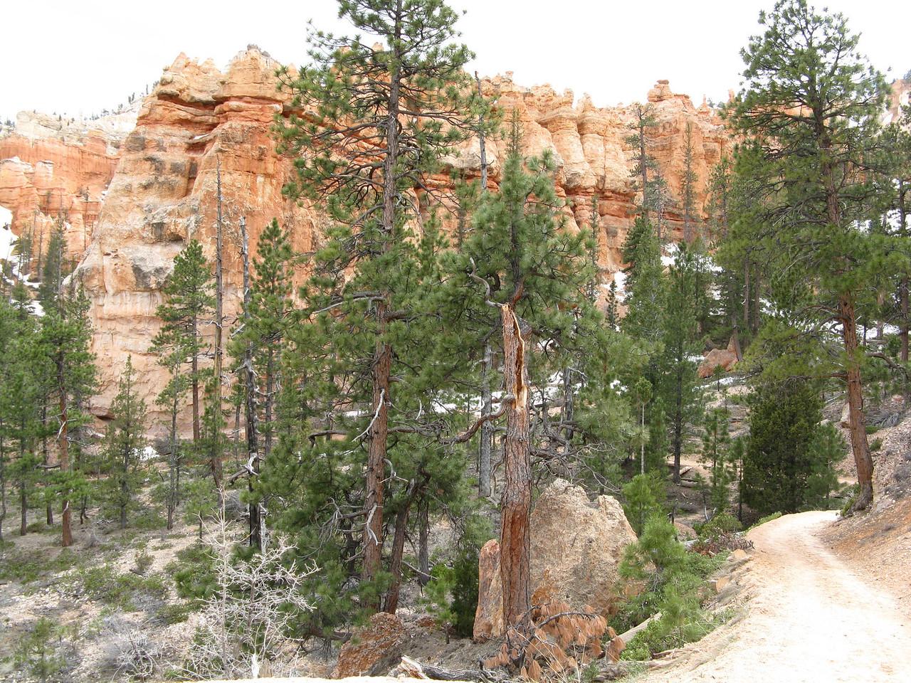 2011-04-20 Bryce trail 074