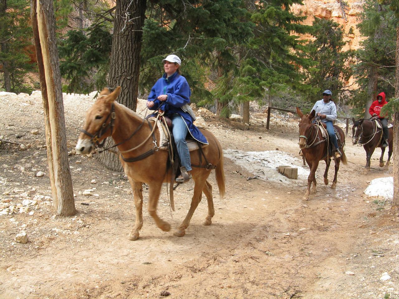 2011-04-20 Bryce trail 103