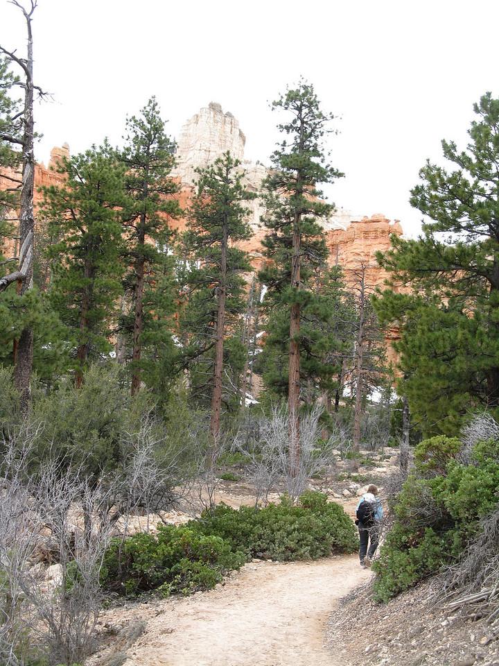 2011-04-20 Bryce trail 076