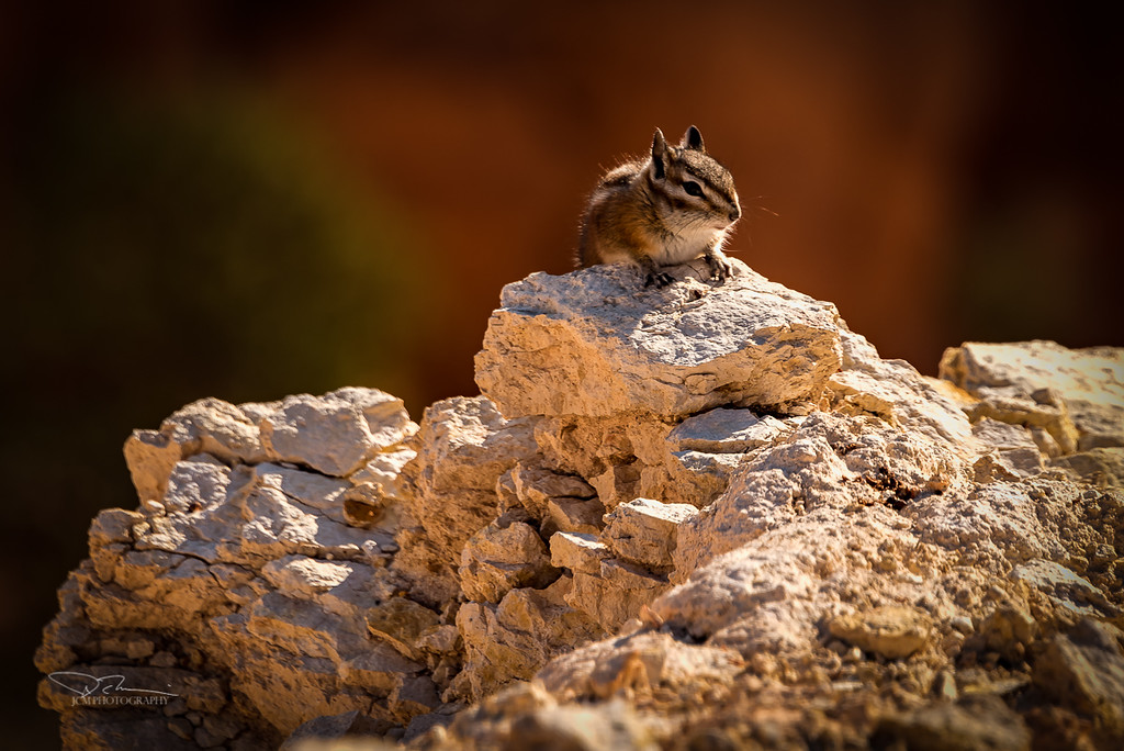 Chipmunk on the edge of Bryce Canyon
