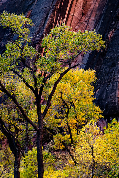 Fall Color, Zion