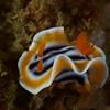 Buceo Anilao 081