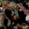 Buceo Anilao 022
