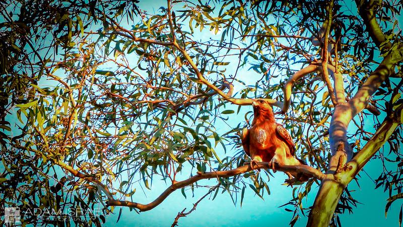 Eagles Port -- Barley Falls, Geelong