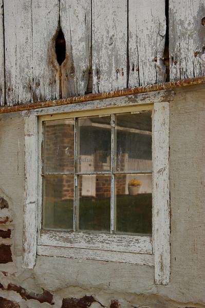Woodhill Road Yellow Mum Reflection, Bucks County, PA