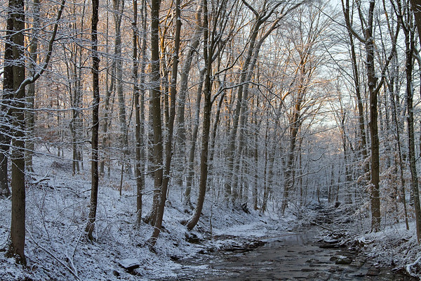 Snowy Trees and Creek at Dawn