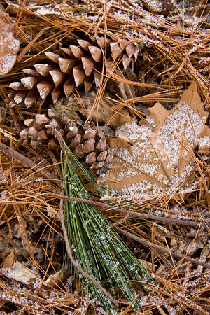 Pine Cones and Needles Dusted in Snow