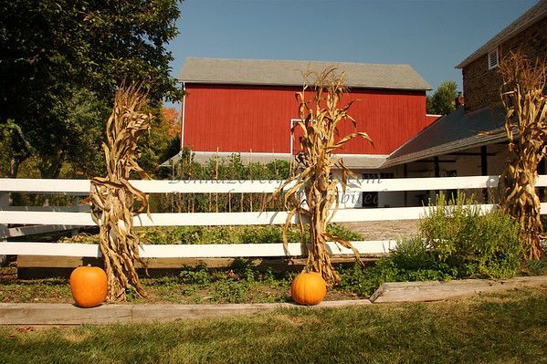 Red Barn & Pumpkins, Bucks County, PA