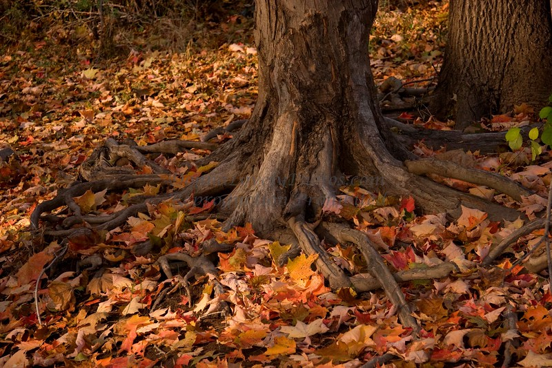 Fall Leaves & Roots