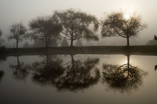 Trees in Foggy Sunrise Reflecting in Pond