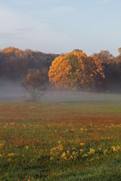Fog in Field, Tyler State Park, Newtown, PA