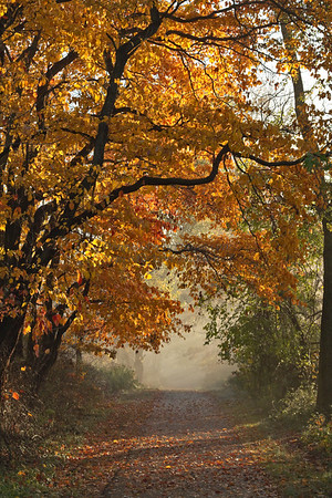 Fall Walkway with Fog, Tyler State Park, Newtown, PA