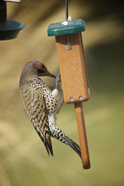 Bucks County Birds