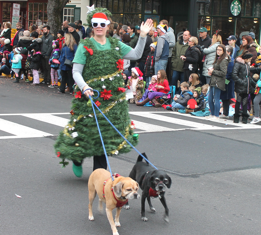 . Dogs and Cats Rule out for a holiday stroll.