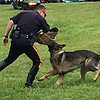 An officer demonstrates the ability of a canine officer to take down a suspect.