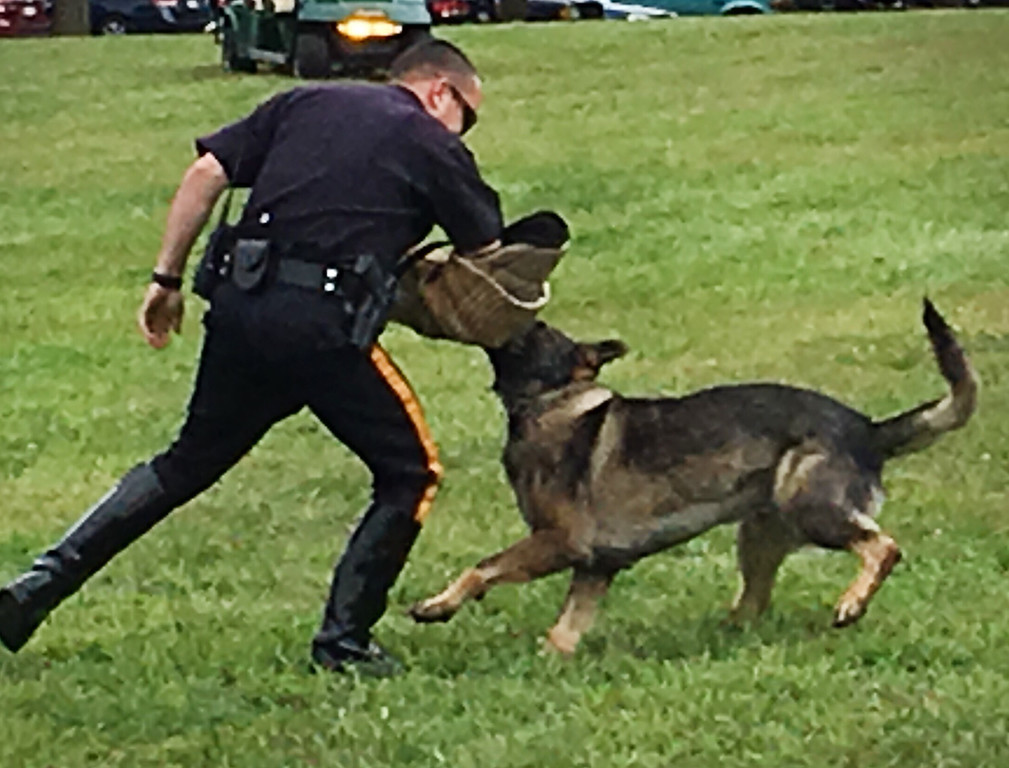 . An officer demonstrates the ability of a canine officer to take down a suspect.