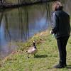 Kathi, hortense, goose, canal