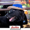 bubba my hat flemington