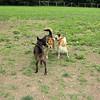 Paco, Stella, Maddie