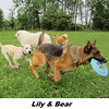 Lily, Bear