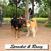 Sprocket & Rosey