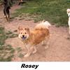 Rosey