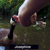 Josephine, goose, canal, treats, FB