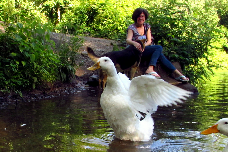 Kathi, cher, duck, maddie, wings, canal