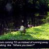 Novio, canal, goose, 2, FB