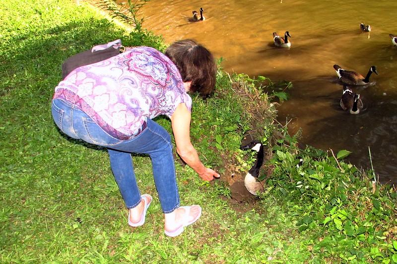Novio, canal, goose, Kathi