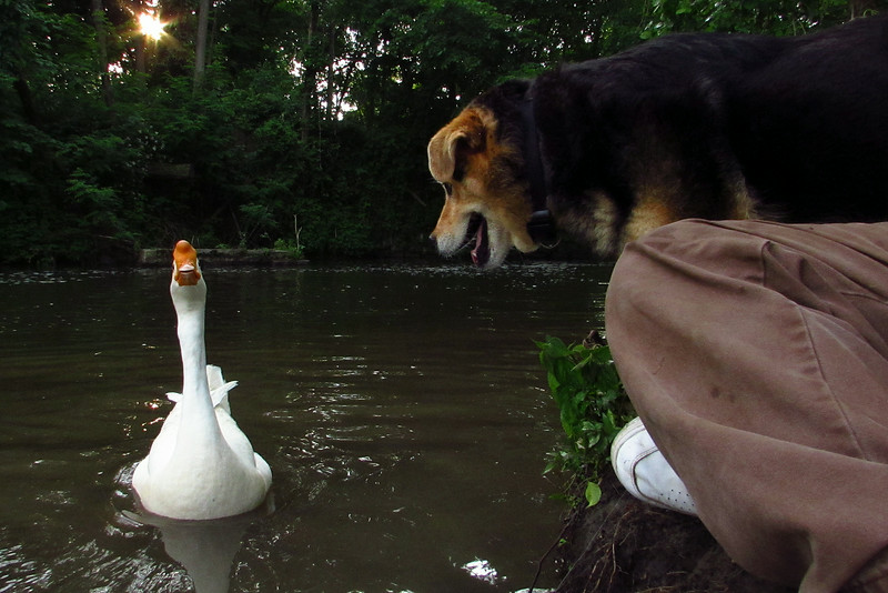 Maddie, Big Guy, Canal, close
