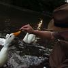sonny, duck, treats, canal, 2