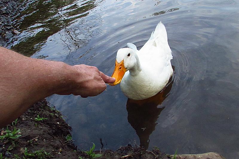 me, Sonny, beak, touch, duck, canal, 2, FB