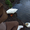 Sonny, up, on bank, beside, me, duck, canal, 1, FB