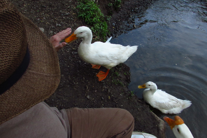 Sonny, up, on bank, beside, me, duck, canal, 2