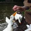 sonny, duck, canal, me, treats, close