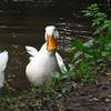 sonny, duck, canal, FB